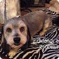 Adopt A Pet :: EDWARD - Mission Viejo, CA