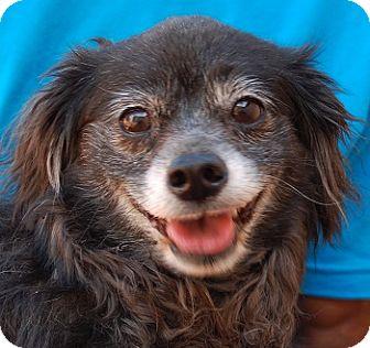 Spaniel (Unknown Type) Mix Dog for adoption in Las Vegas, Nevada - Austin