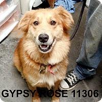 Adopt A Pet :: Gypsy - Greencastle, NC