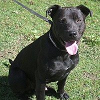 Adopt A Pet :: Roman - COURTESY LISTING - Wilmington, DE