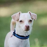 Adopt A Pet :: PETER RABBIT - San Luis Rey, CA