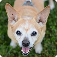 Adopt A Pet :: Waddles - Matthews, NC