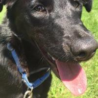 Adopt A Pet :: Kassidy - Berea, OH