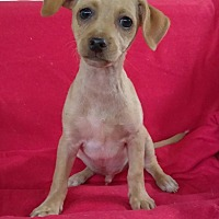 Adopt A Pet :: Kelso - West Springfield, MA