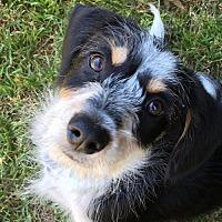 Adopt A Pet :: Tucker - Campbell, CA