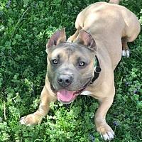 Adopt A Pet :: Lance - Buffalo, NY
