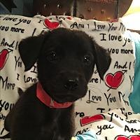 Adopt A Pet :: MILO - Cranston, RI