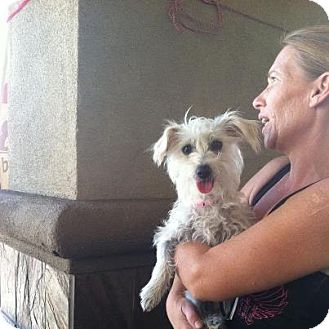 Terrier (Unknown Type, Small) Mix Dog for adoption in Las Vegas, Nevada - Jackie