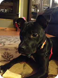 Terrier (Unknown Type, Small) Mix Puppy for adoption in Minnetonka, Minnesota - POLLY