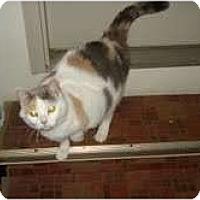 Adopt A Pet :: Kiki - Warren, OH