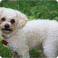 Adopt A Pet :: Mayday! Mayday! - Nashville, TN