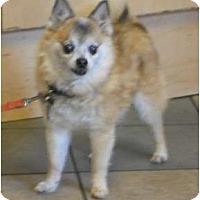 Adopt A Pet :: RALFIE - Georgetown, KY
