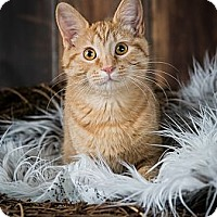 Adopt A Pet :: Bartholomew - Eagan, MN
