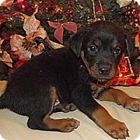 Adopt A Pet :: Gordon - Phoenix, AZ