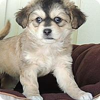 Adopt A Pet :: Hermione - La Habra Heights, CA
