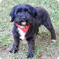 Adopt A Pet :: Blaze - Mocksville, NC