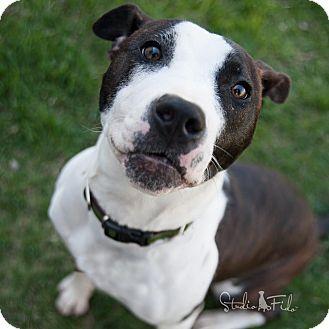 Terrier (Unknown Type, Medium) Mix Puppy for adoption in Farmington Hills, Michigan - Legacy