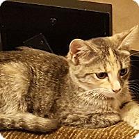 Adopt A Pet :: Idgie - McDonough, GA