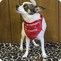 Adopt A Pet :: Milo - Tavares, FL