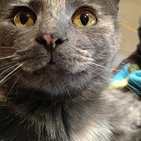 Adopt A Pet :: MARNEY - Pena Blanca, NM