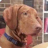 Adopt A Pet :: Rudy-adoption pending - Schaumburg, IL