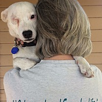 Adopt A Pet :: Stacy - Tracy, CA