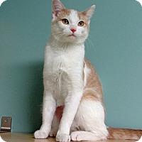 Adopt A Pet :: Mabel - Roseville, MN
