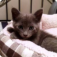 Adopt A Pet :: Jaycee - Nolensville, TN