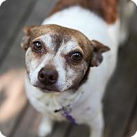Adopt A Pet :: Roxy - Pittsburg, KS