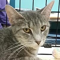 Adopt A Pet :: Alexis - Amelia, OH
