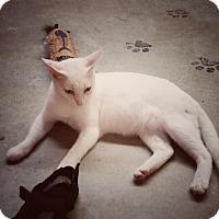Adopt A Pet :: Leo - Jackson, MO