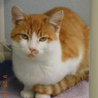 Adopt A Pet :: Zelda - Owensboro, KY