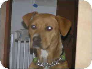 German Shepherd Dog Mix Dog for adoption in Sacramento, California - Cinnamon