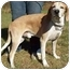 Photo 3 - Labrador Retriever/Hound (Unknown Type) Mix Dog for adoption in North Judson, Indiana - Uncle Joe