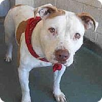 Adopt A Pet :: Spark - Naples, FL