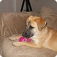 Adopt A Pet :: Annabella - Conyers, GA