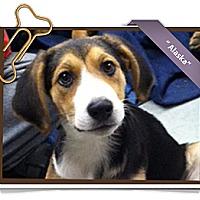 Adopt A Pet :: Alaska - Portland, OR