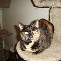 Adopt A Pet :: Confetti - Ft. Lauderdale, FL