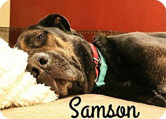 Mastiff/German Shepherd Dog Mix Dog for adoption in Fort Worth, Texas - Samson