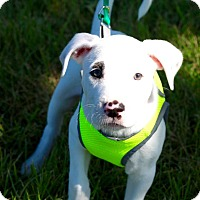 Adopt A Pet :: Zeus - Mount Laurel, NJ