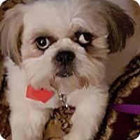 Adopt A Pet :: Sasha - Troy, MI