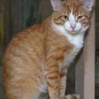 Adopt A Pet :: Maximus - Westville, IN
