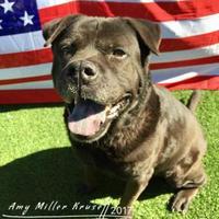 Adopt A Pet :: BRUISER - Land O'Lakes, FL
