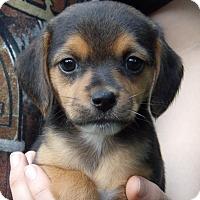 Adopt A Pet :: Faith (2 lb) Video - Twinsburg, OH
