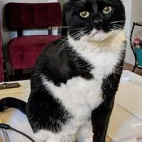 Adopt A Pet :: Ringo - Denver, CO