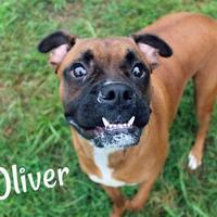 Adopt A Pet :: Oliver - Melbourne, KY