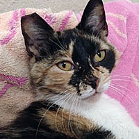 Adopt A Pet :: Regina - Pacific Grove, CA