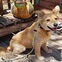 Adopt A Pet :: CASSIE - Oroville, CA