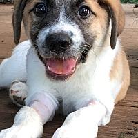 Adopt A Pet :: Luke - Monticello, GA
