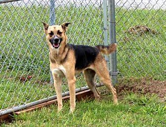 German Shepherd Dog Mix Dog for adoption in Washington, D.C. - INGRID-FOSTER NEEDED